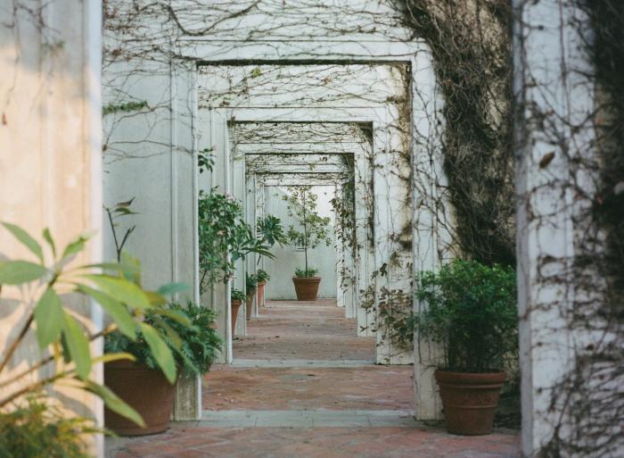 Planten in de tuinkamer
